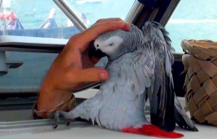 Вы арестованы за попугая-наблюдателя.