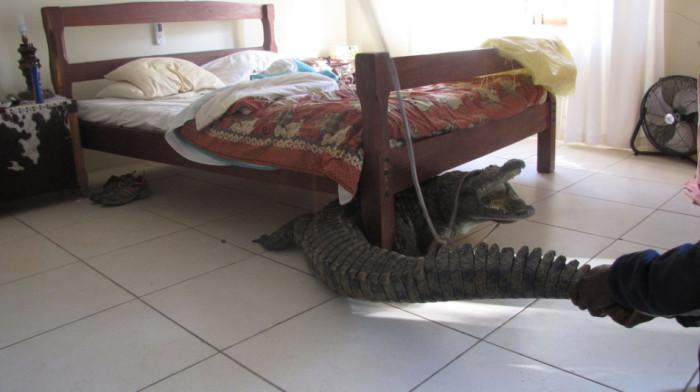 Крокодил под кроватью.