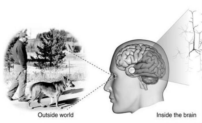 Тайны человеческого сознания.
