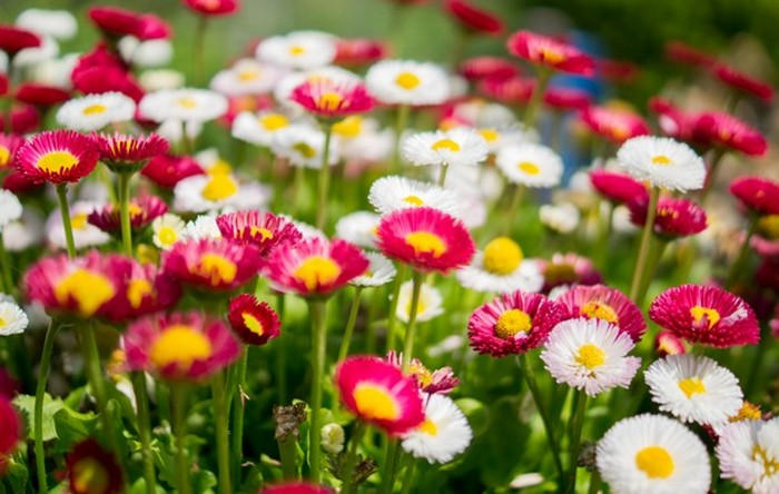 Эволюция цветов.