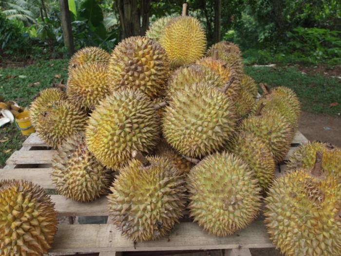 * * La pieza más controvertida de la fruta en el mundo.
