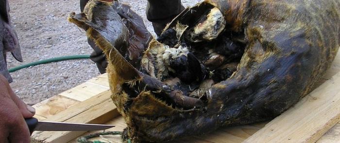 Кивиак — традиционное эскимосское блюдо.