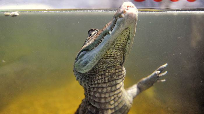 Крокодилы, кипрское масло и падающие звёзды в лечении акне.