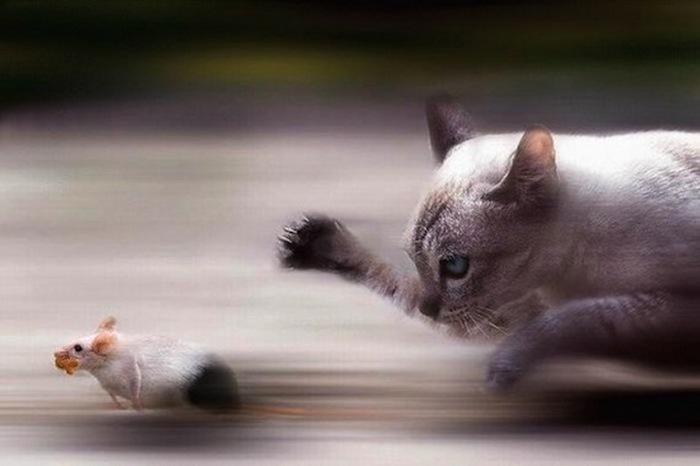 Словить мышь, сварить и вылечиться!