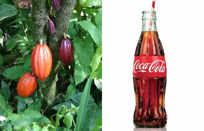Удивительный факт о Coca-Cola: мотив семян какао в дизайне бутылок.