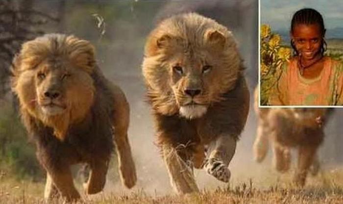 Забавный факт: царь джунглей.