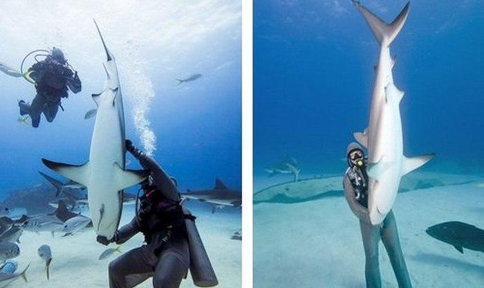Забавный факт: паралич акулы.
