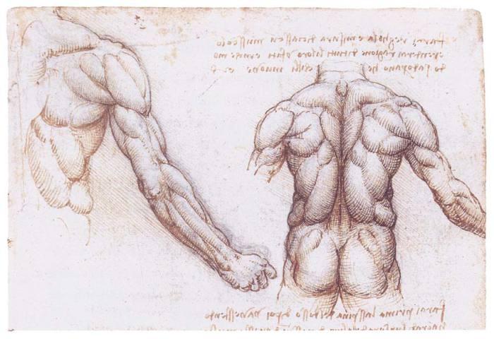 Анатомически рисунки Леонардо.