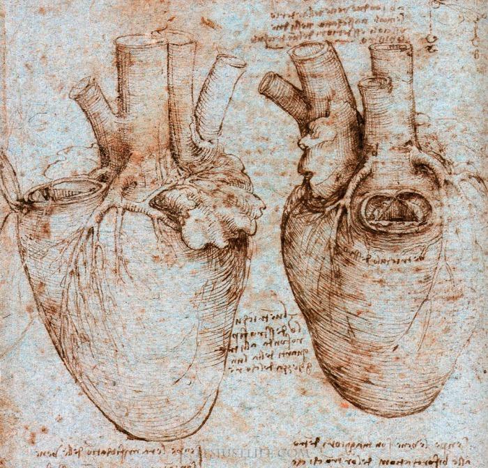 Да Винчи - автор трактата о сердце.
