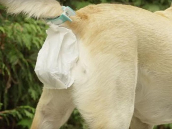 Piqapoo: и мешок под хвостом.