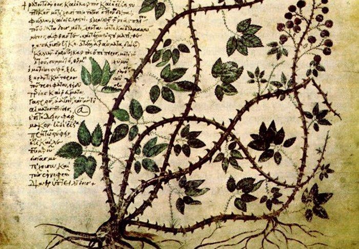 Сомнительная контрацепция по-древне-гречески.
