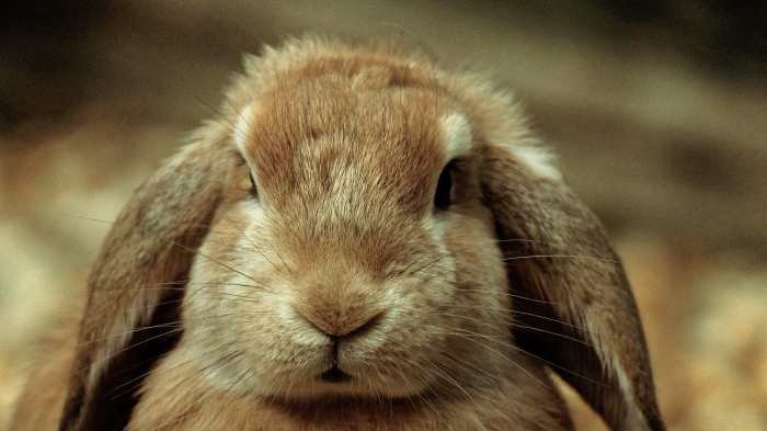 Носы кроликов.