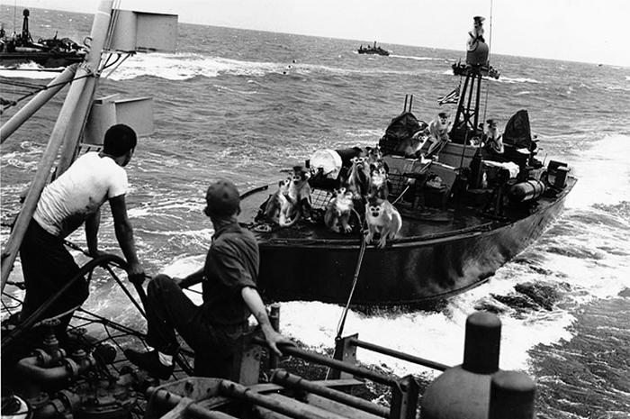 Обезьяны и военные лодки.