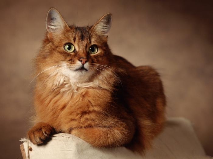 Кошки и высокомерие.