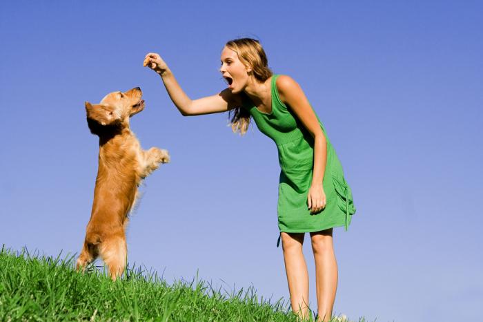 Психология собак.