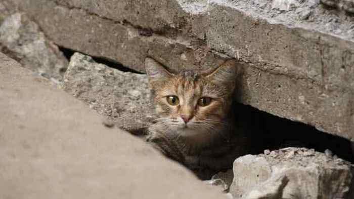 Хиллари Ренессанс: поиск потерянных животных.