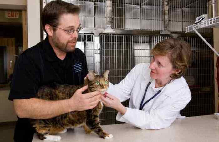 Кадзуко Тао: лечение животных иглоукалыванием.