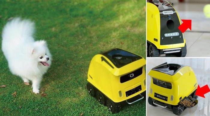 Робот, который составит компанию домашним питомцам