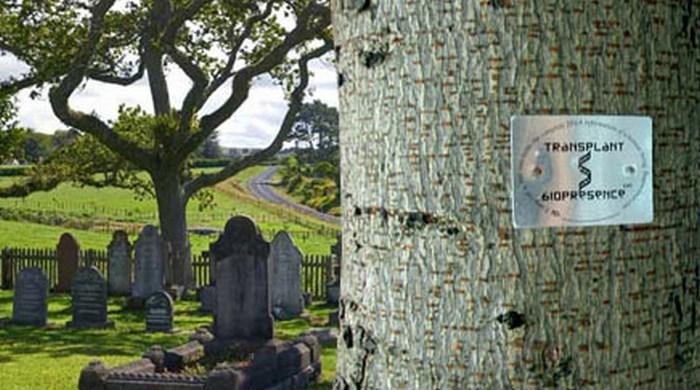 Деревья с ДНК человека.