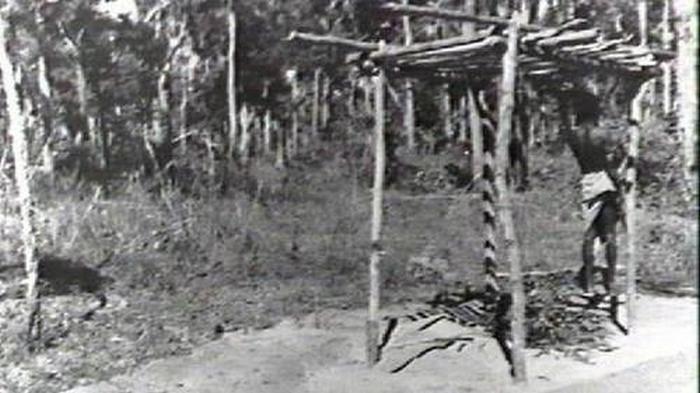 Экспозиции мертвых тел аборигенов