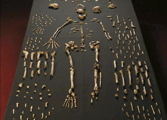 Homo Naledi.
