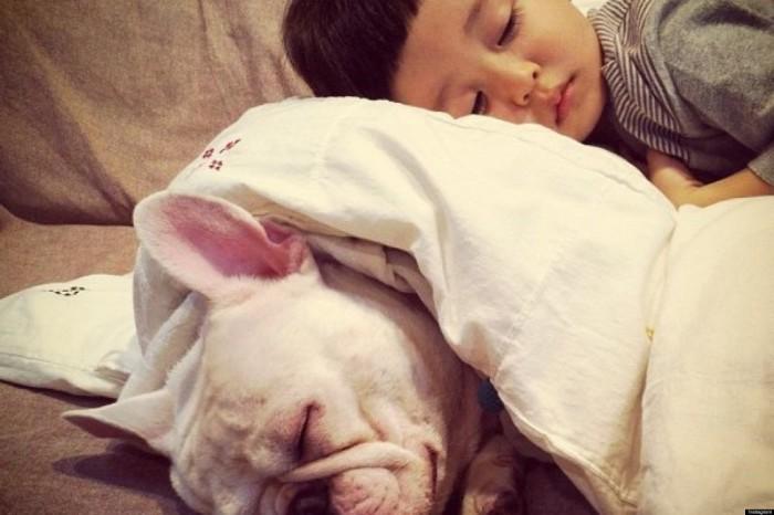 Животных больше, чем детей.