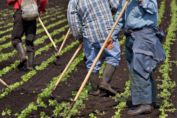 Фермы рабов в Южной Корее