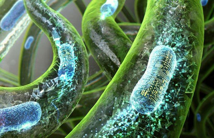 Генетически модифицированные клетки бактерий.