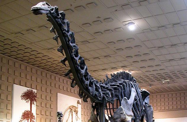 Бронтозавр.