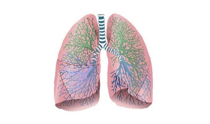 И дышим по-разному.