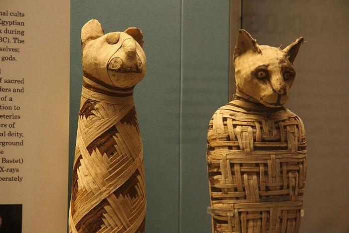 Такие разные мумии.