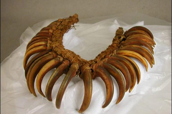 Ожерелье из когтей медведя.