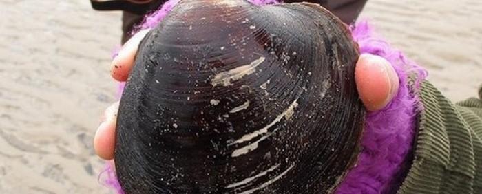 Самый древний моллюск.