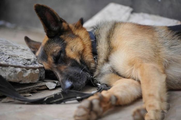 Собачья депрессия.