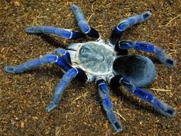Хитиновая оболочка паука.