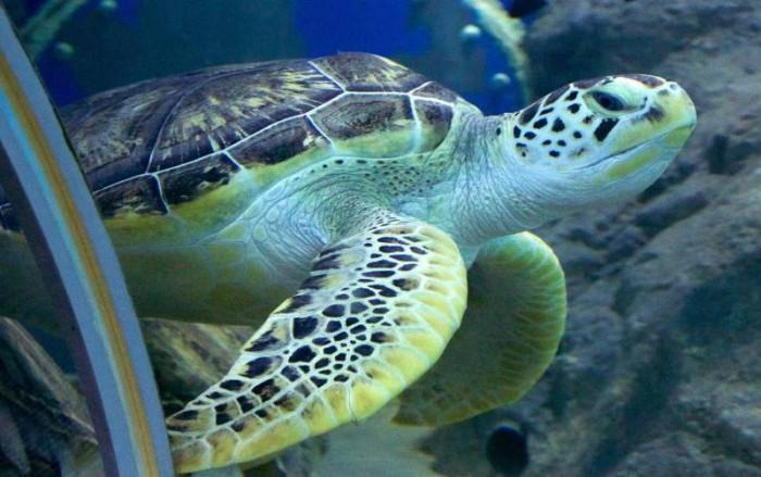 Животный мир подводных глубин.
