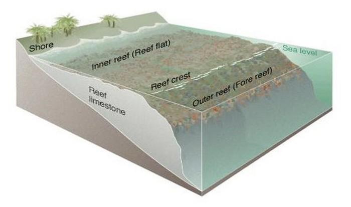 Размеры океана.