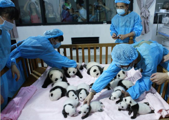 Няня для панд и другие необычные профессии.