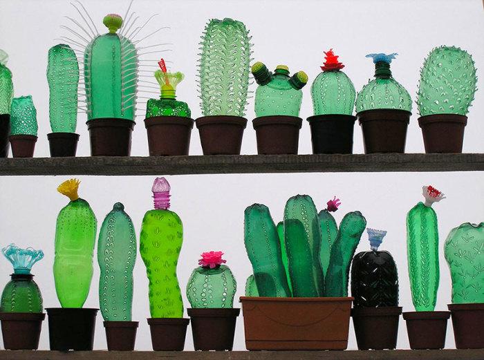 И ещё кактусы.