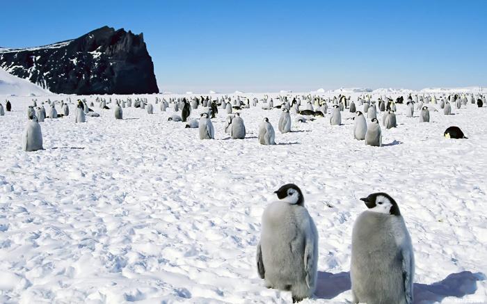 Снег, лед, пингвины и невероятные приключения!