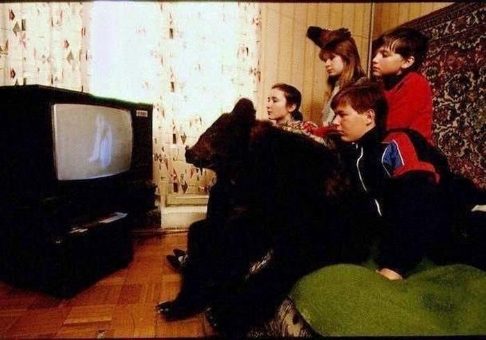 С медведями смотрят телевизор.