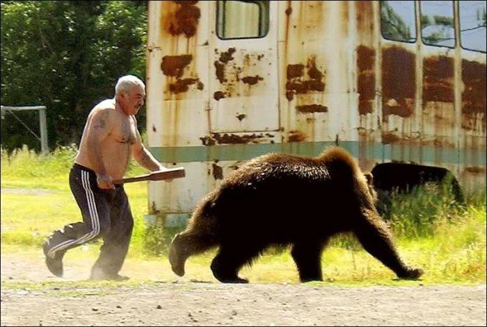 В когда медведь становится назойлив, его просто прогоняют.