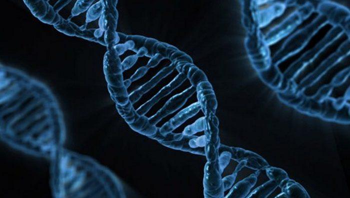 Биология универсальная наука?