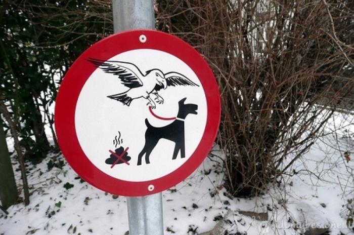 Вороны - похитители собак.