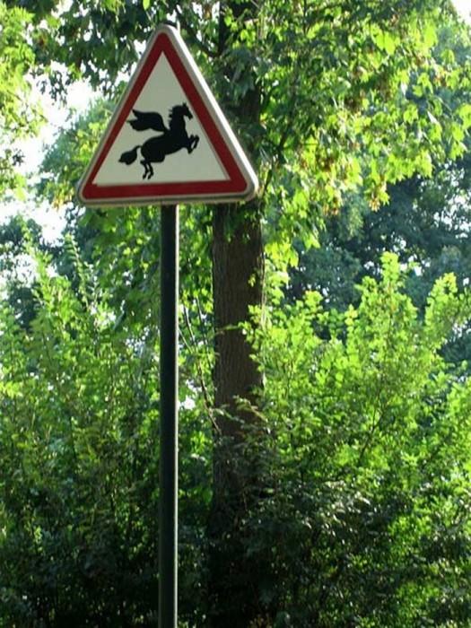 Осторожно пегасы!