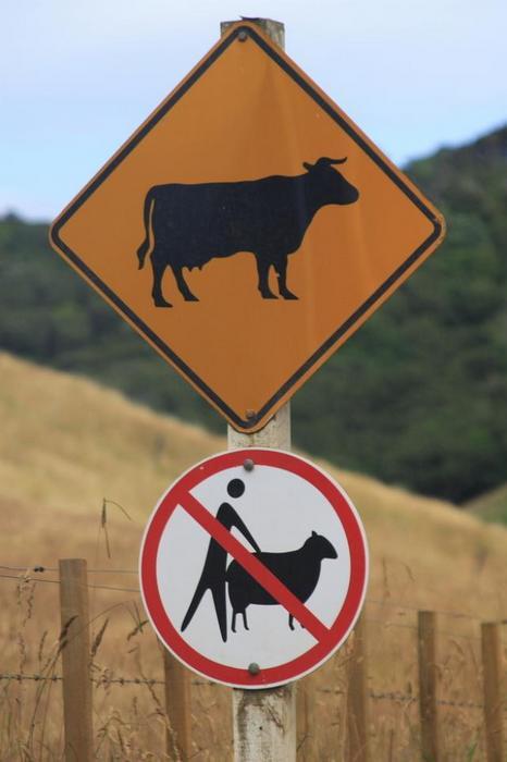 А коров можно...