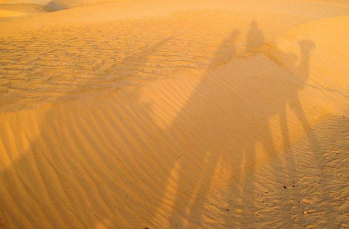 Тунисская гигантская солнечная ферма.