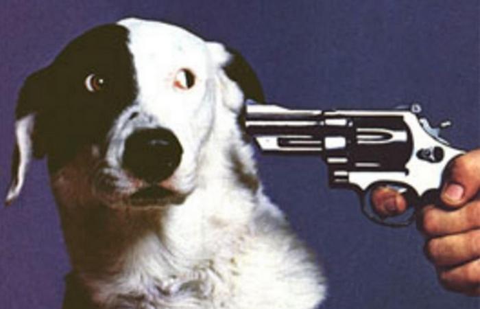 Приказано выжить!: не паникуй под дулом пистолета.