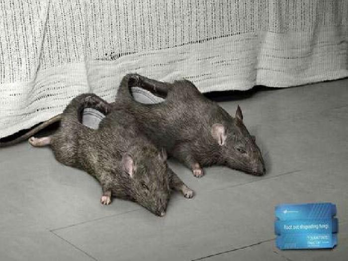 Рекламные тапки-крысы.