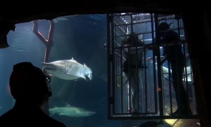 Свадьба в резервуаре с акулами.